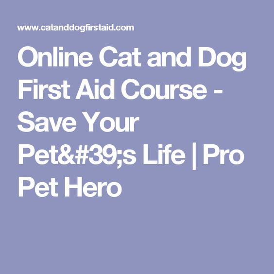 Online Cat And Dog First Aid Course Save Your Pet 39 S Life