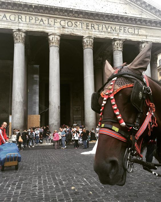 Pantheon #Italy #sightseeing #horse #pantheon #wife #walk #holiday #love @joelleadlem by neilski_neil