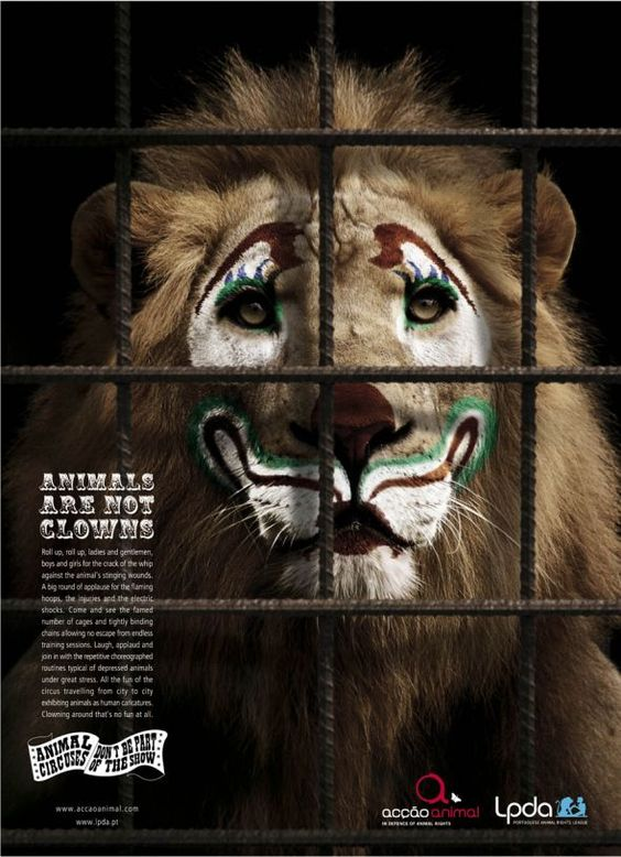 """#Animals are not clowns"" - #Portuguese Animal Rights League.:"