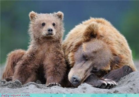 Daily Squee bears