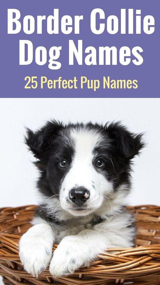 Top Border Collie Names 25 Wonderful Names For Your Pup Dog Names Border Collie Names Border Collie Dog