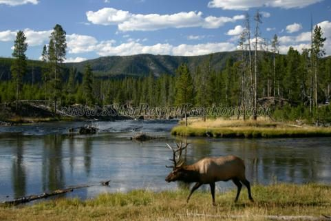 Yellowstone national park cabin rentals vacation and for Cabin yellowstone park