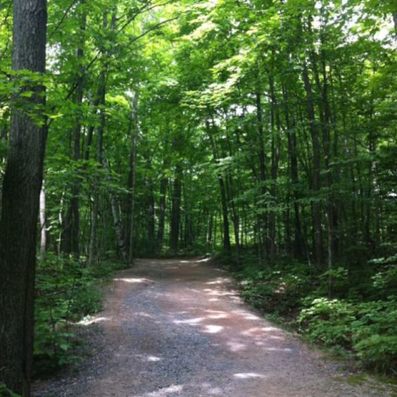 Gatineau Park in the summer
