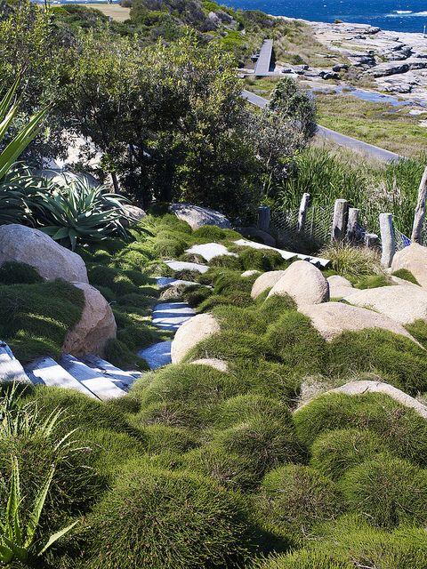 Casuarina cousin it boulders | coastal garden