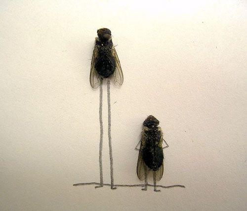 la vie des mouches | myopemyope