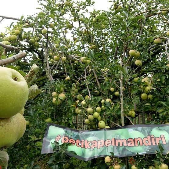 Agrowisata Malang Petik Apel