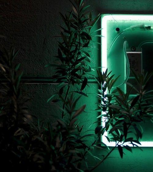 Pin By Meg On Love Green Dark Green Aesthetic Green Aesthetic Green Aesthetic Tumblr