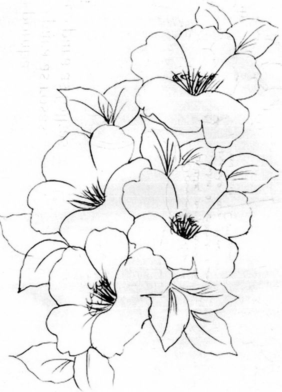 Flower Line Drawing Templates : Flower image clip art color in blank fill yourself