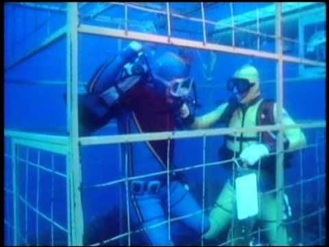 Great White Sharks of Danger Reef - YouTube