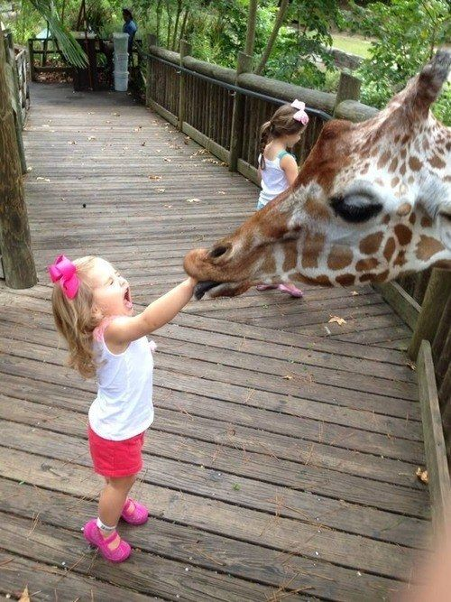 """This giraffe who got a little too fresh. 