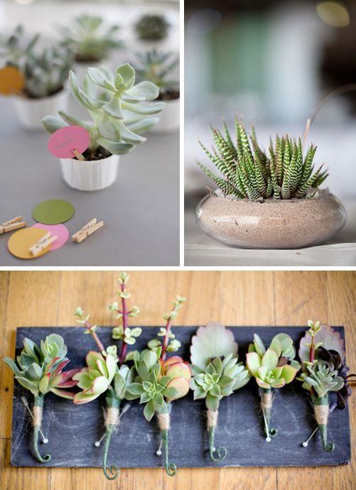 Succulents & Terrariums