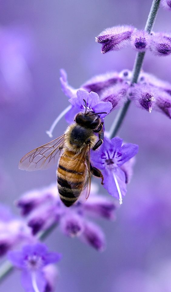 Site has suggestions for plants/flowers that will attract and provide food for bees in all 4 seasons (click photo)... nice - and informative Journal article, click link here - http://www.jstor.org/stable/2455613?seq=1#page_scan_tab_contents.                                                                                                                                                      More