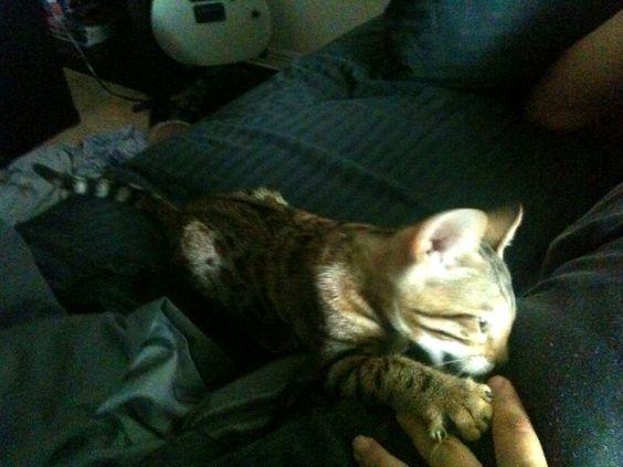 Mila cat on the hunt <3