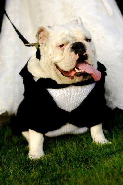 Suit up your pup for the big day
