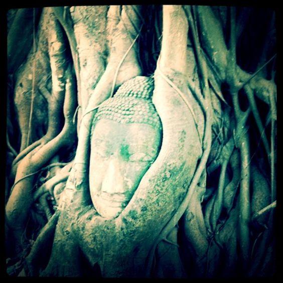 buda-tree