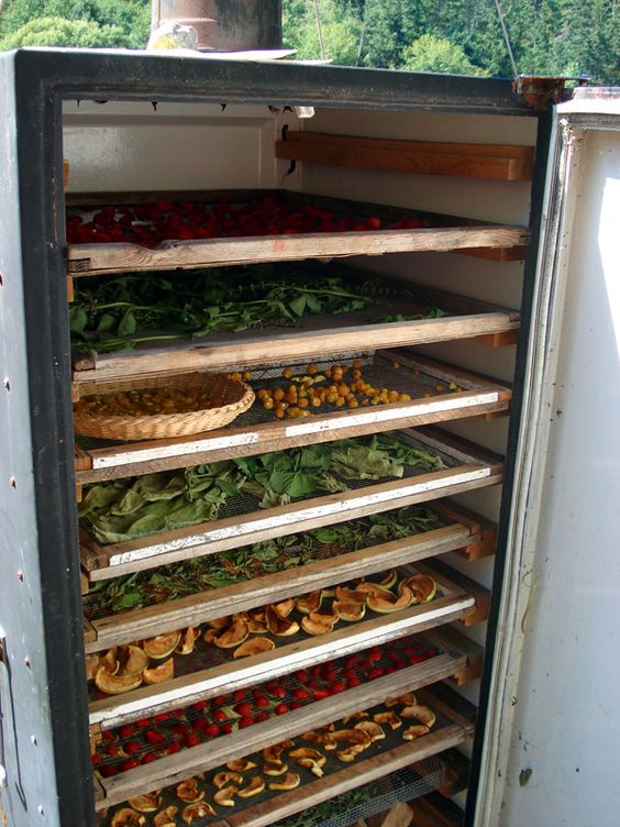 A solar dehydrator, made of an old fridge, dries various fruit and herbs.