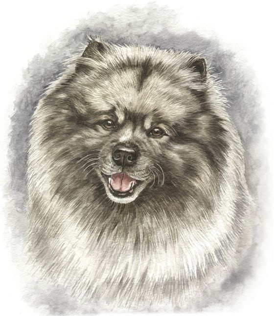 KEESHOND DOG Personalised Option Cotton Canvas Bag Apron Cushion Teatowel TShirt