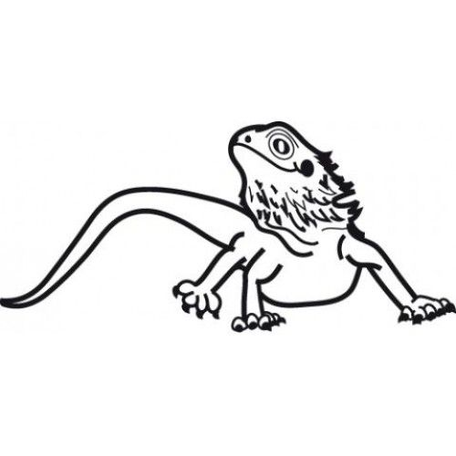 Bearded Dragon Coloring Pages Best Coloring Pages For Kids Dragon Coloring Page Bearded Dragon Bearded Dragon Cute