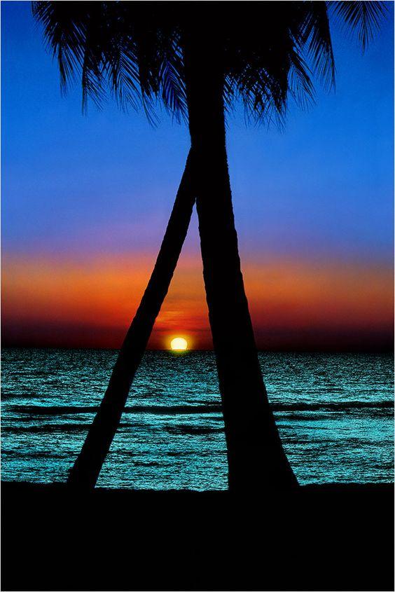 "Title:   ""Tropical Blues"";  Description:   Crossed Palms at Sunset; Location:   Key West; Publication:   Florida…Beyond the Blue Horizon; Alan S. Maltz Gallery:"