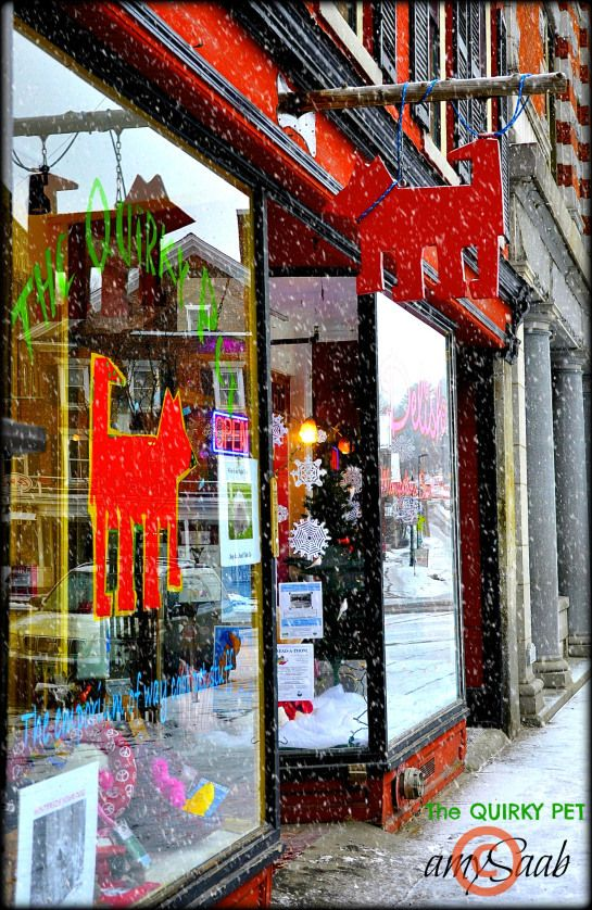 pet store in Montpelier, Vermont Dog Boutique Display