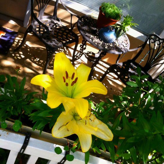 First blooms in my garden!