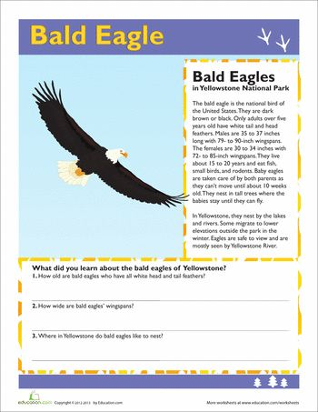 Worksheets: Bald Eagle