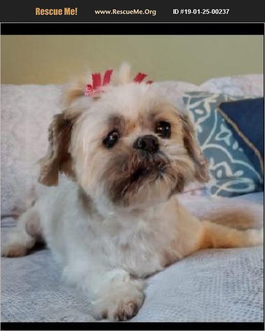 Adopt 19012500237 Shih Tzu Rescue Marana Az Shihtzu Shih Tzu Rescue Shih Tzu Dogs