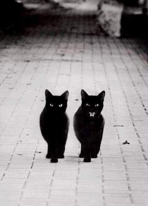 My Lullaby Seltsame Katzen Katzen Katze Schwarz Weiss