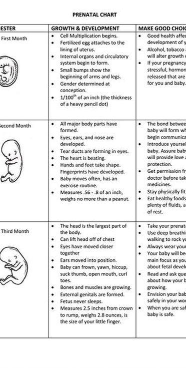 The  Best Prenatal Development Ideas On   Pregnancy