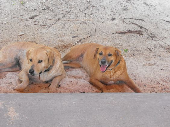 Dogs enjoying a day at the zoo beach!