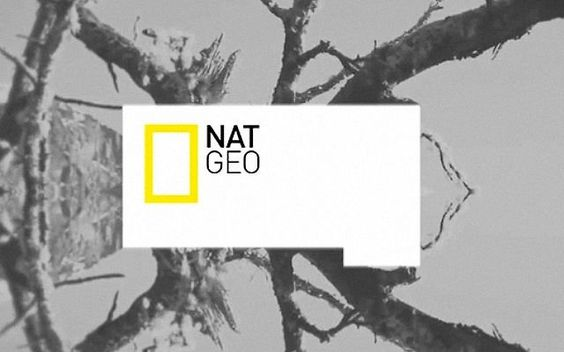 Broadcast branding and identity pitch for NatGeo channel showcasing the modular design key elements, ID`s, brand bug, fillers, transitions in a 2 min video edit.  we have designed a simple but modular elemets to interact with the footage image from primary shapes we build the space to place the different information about each program and section for the tv channel  http://www.dhnn.com