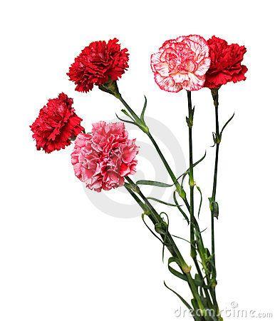 Ramo de flores del clavel/Clavel m. Planta cariofilácea, cuyas flores, de hermosos colores, son muy apreciadas. || Riopl. Clavel del aire, género de plantas bromeliáceas...
