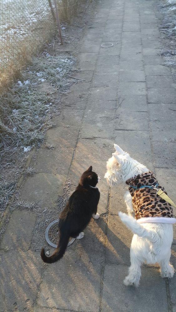 My dear Maru! My Westie! 내 마루 - West Highland White Terrier - and my Cat Panda 😊