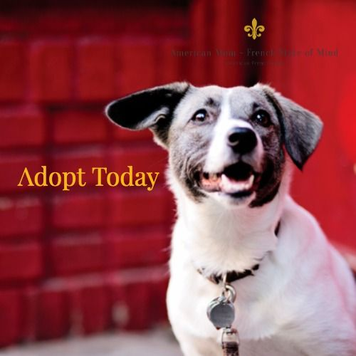 Rescue Dogs Adopt Don T Shop Adoption In New York City In 2020 Cute Small Dogs Baby Pugs Cute Baby Animals