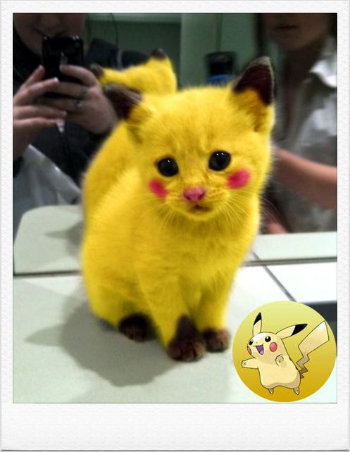 I am Pikachu!!!