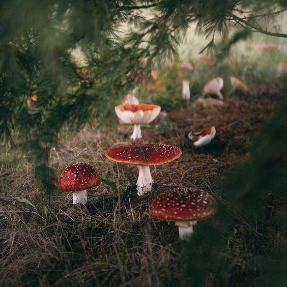 rainy day mushroom pillow - Page 2 865413797a8e5b8ac9b70ebbcf3b694c