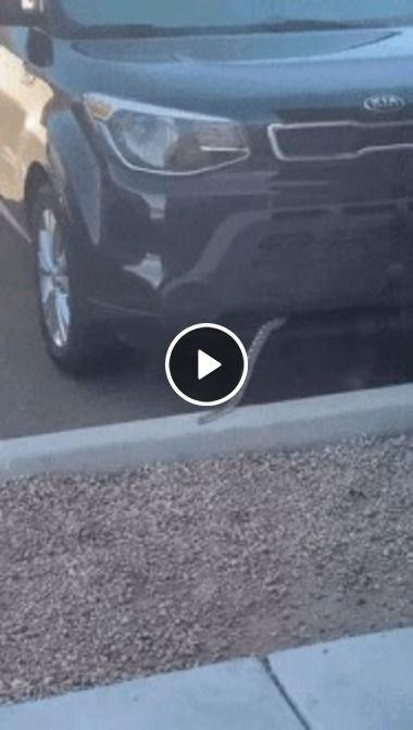 Cobra foi fragada saindo do carro,que perigo.