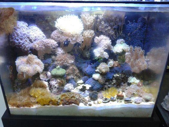 vps aquarismo em Ribeirão Preto, SP