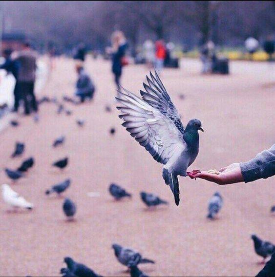 لا تتحسر على أخطاء الماضي فدروس الحياة لا تأتي مجانا گل موقف من الحياة هو تجربة يستفيد منها الانسان ويتعلم منها أمور كثيرة صب Gods Love Love The Lord Animals