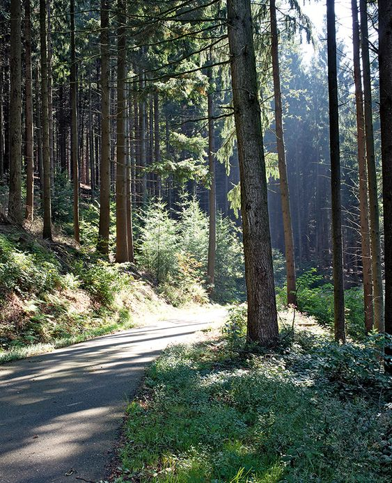 Schnaps trail Black Forest Germany forest road