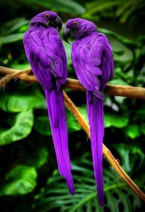 Pin By Tayde On Hummingbirds Emaculant Beautiful Birds Pretty Birds Animals Beautiful