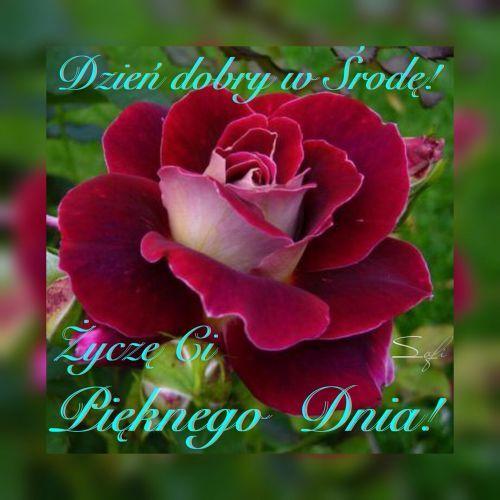Kartka Pod Tytulem Dzien Dobry W Srode Beautiful Flowers Rose Flower Beautiful Roses