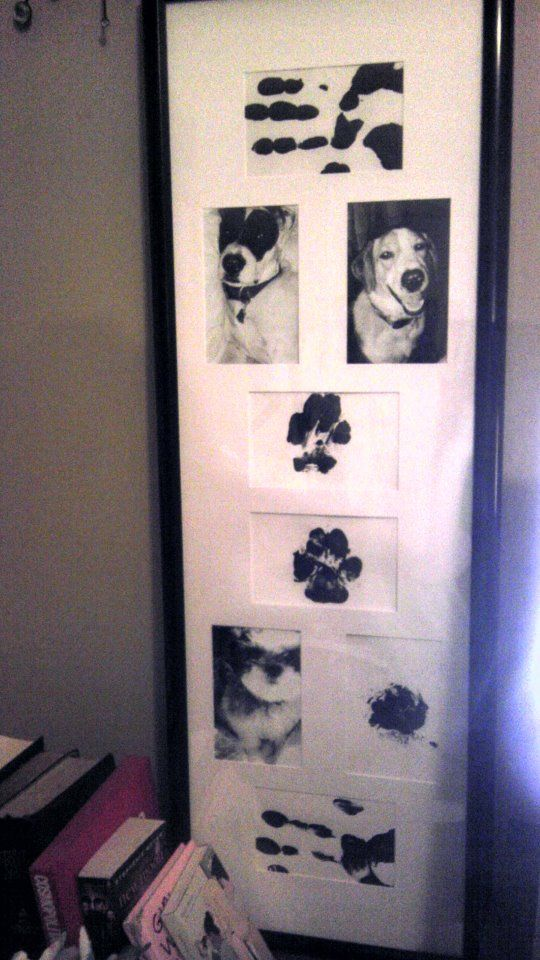 Such a cool idea pix of pets, pets paw prints, owner pix & handprints <3