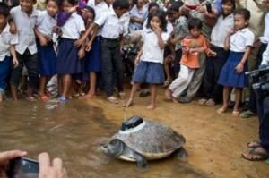 Nothing like a rare turtle dipping into water in Cambodia to build up a huge crowd. http://j.mp/x8OZyB