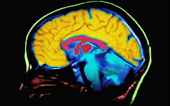 Children whose minds wander 'have sharper brains'
