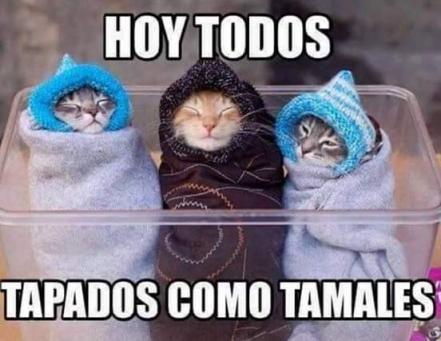 Te Dejamos Unos Memes Del Frio Para Entrar En Calor Memes De Frio Imagenes Chistosas De Frio Clima Frio Gracioso