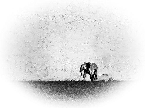 Urban Wild Elephant by COOLIDGE  - Houston Graffiti Art  : http://www.flickr.com/photos/iseenit/5086719174/in/set-72157604184553355