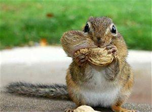 Mmmmm nuts