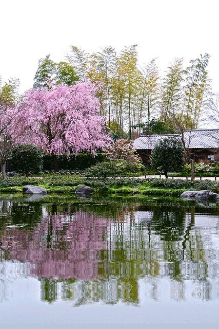 jardin japonais au tamaris jardins japonais animes