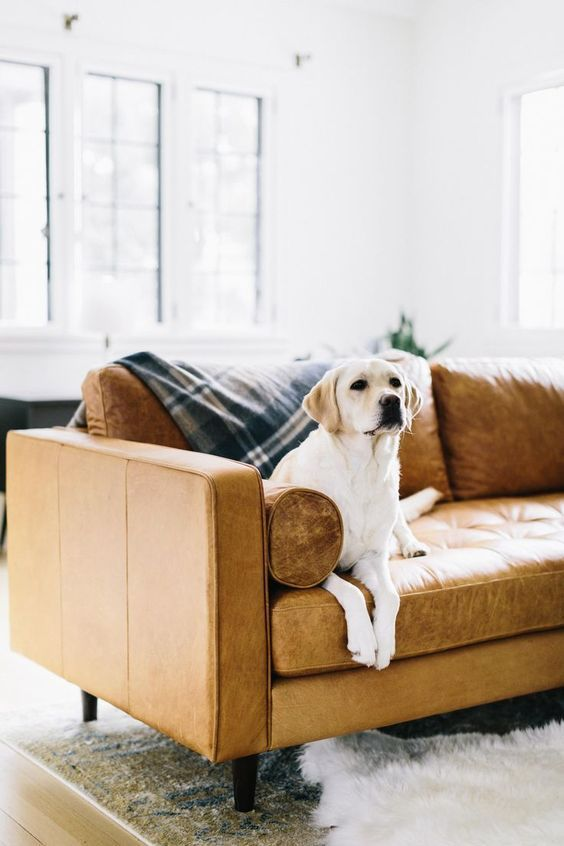Five Tips For Pet Friendly Living With Images Sofa Inspiration #pet #friendly #living #room #furniture